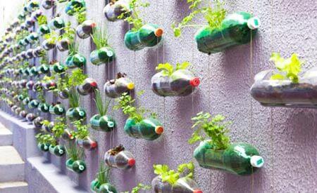 horta vertical de garrafa pet 1 Horta VERTICAL para casa ou apartamento ( tipos, como fazer )