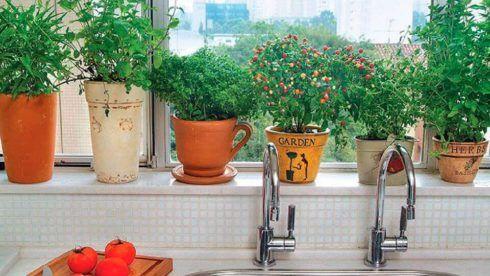 horta vertical em vasos de barro 3 490x276 Horta VERTICAL para casa ou apartamento ( tipos, como fazer )
