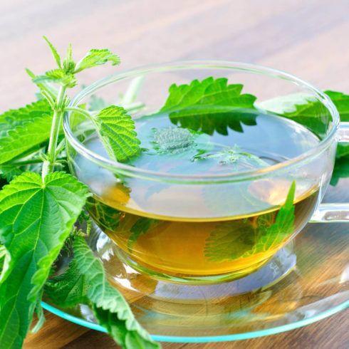 Ch%C3%A1 de Urtiga 490x490 Remédio e Chá para Diabetes plantas medicinais para glicose alta