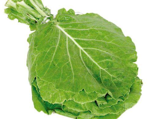 couve folha 490x387 7 Vegetais e Legumes Ricos e Proteína Vegetal, Alimentação Saudável