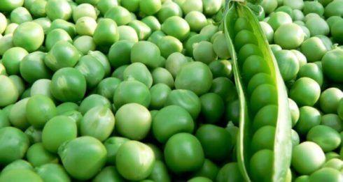 ervilha 490x261 7 Vegetais e Legumes Ricos e Proteína Vegetal, Alimentação Saudável